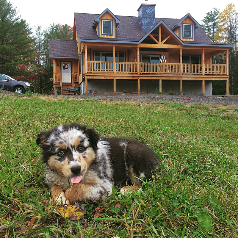 Puppy in yard in front of Adirondack style home